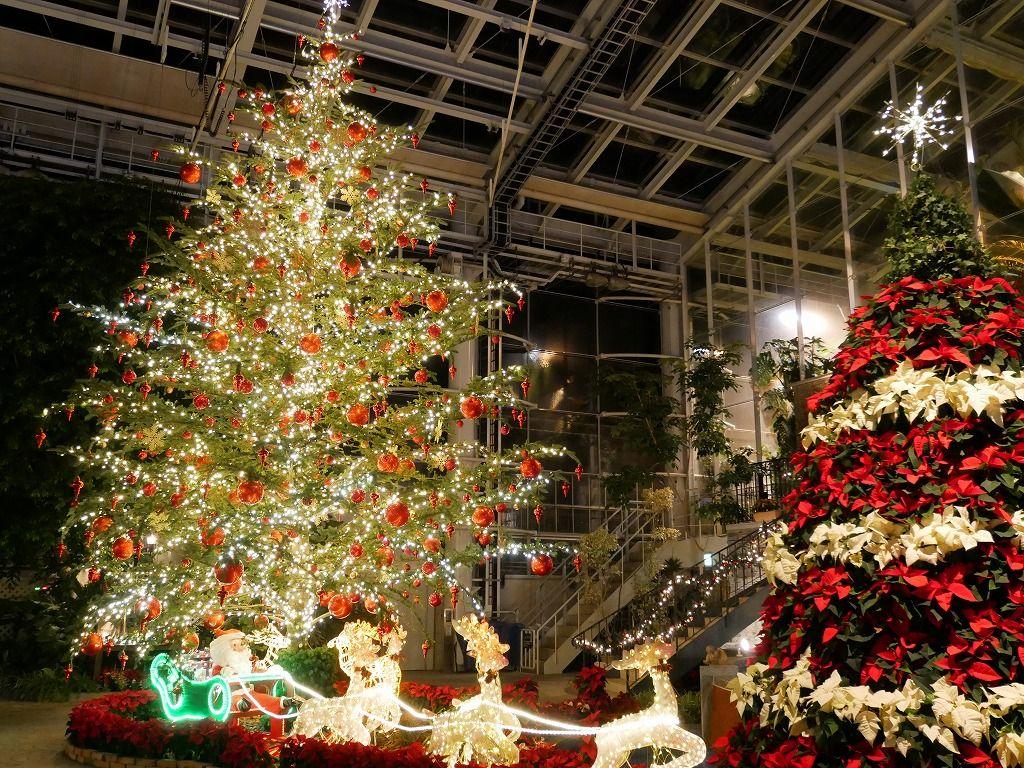 60メートルの藤棚が光のトンネルに!大温室はクリスマス!