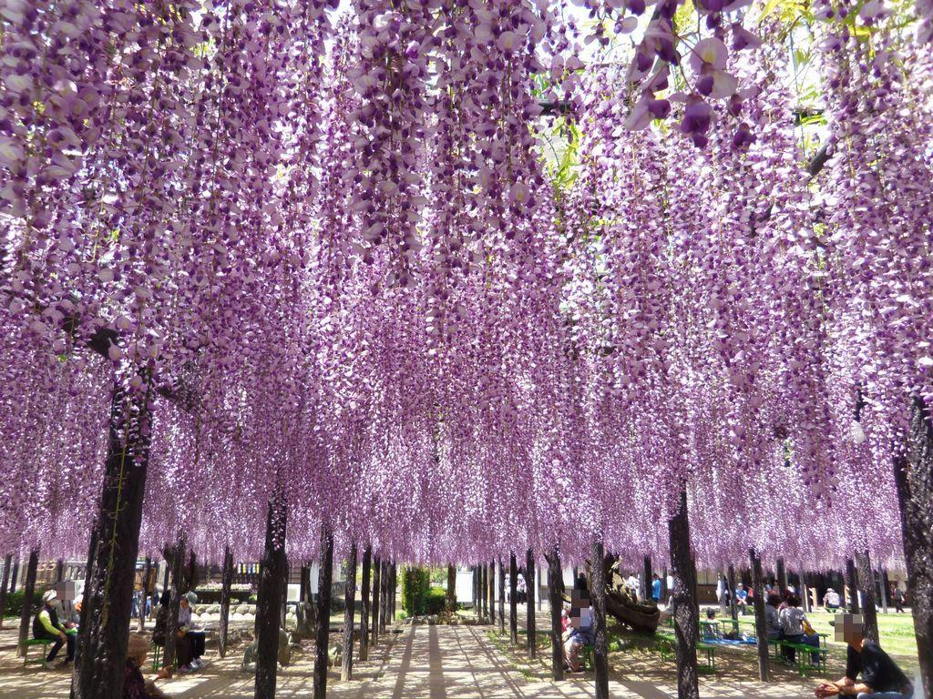 隣接する「豊田熊野記念公園」も薄紫色に!