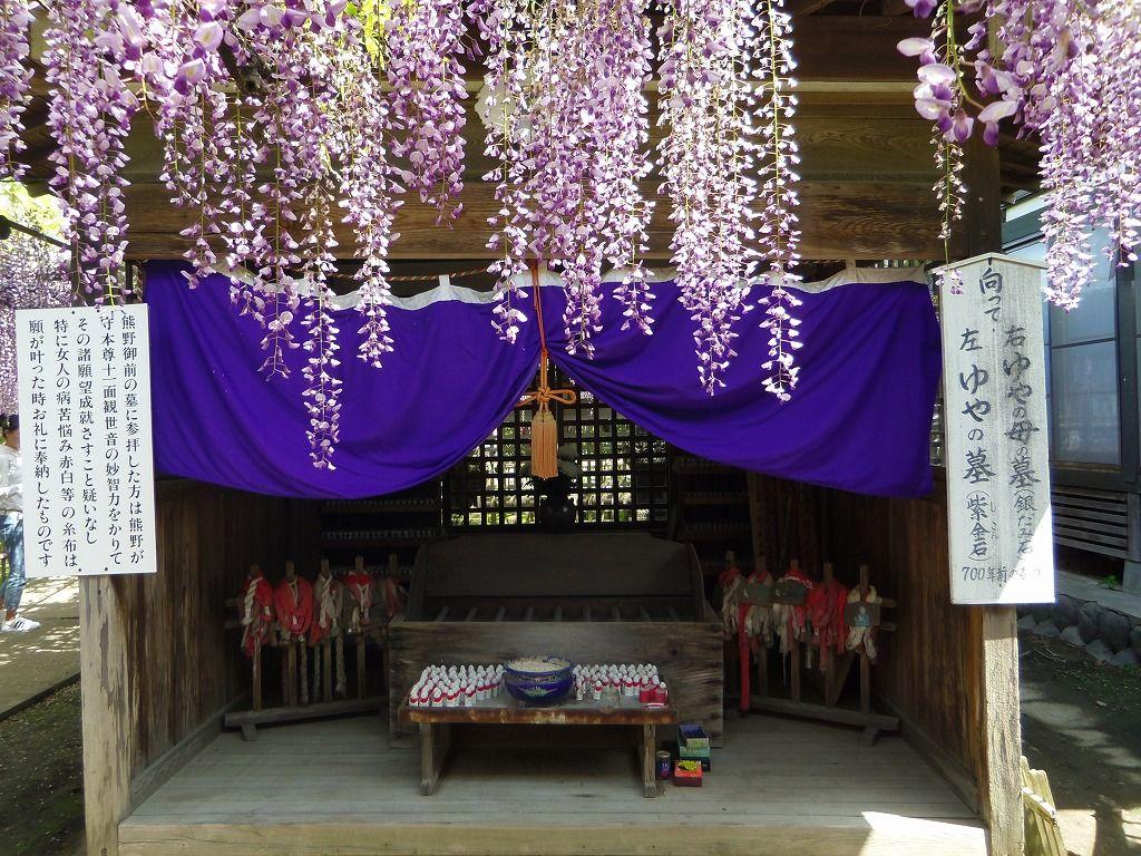 いにしえの時代から愛されてきた「熊野の長藤」