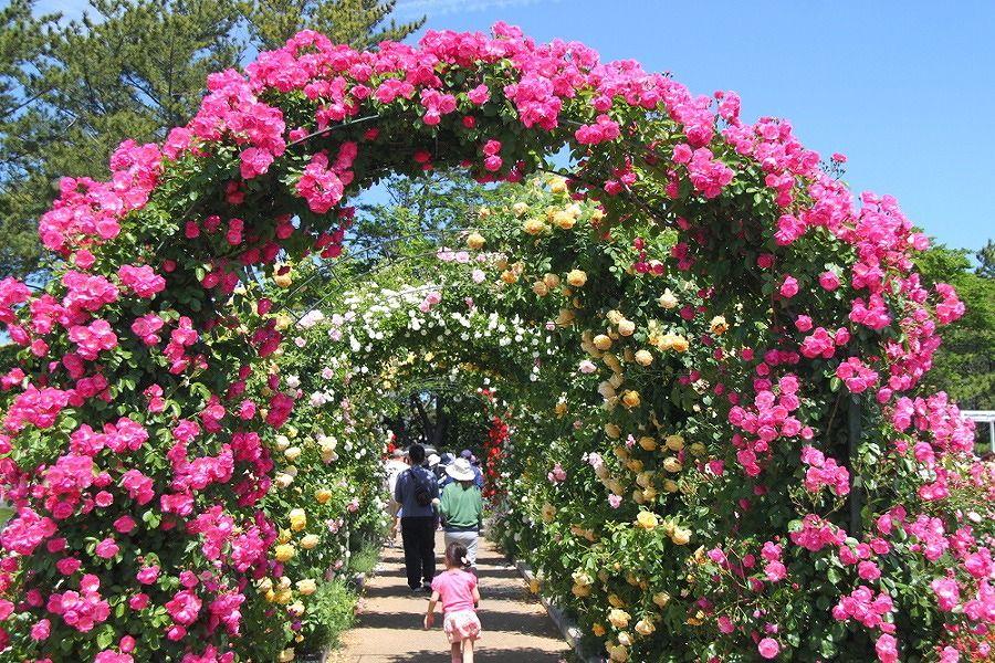 4ヶ所の異なる魅力!浜名湖&浜松市内で魅惑のバラ園めぐり