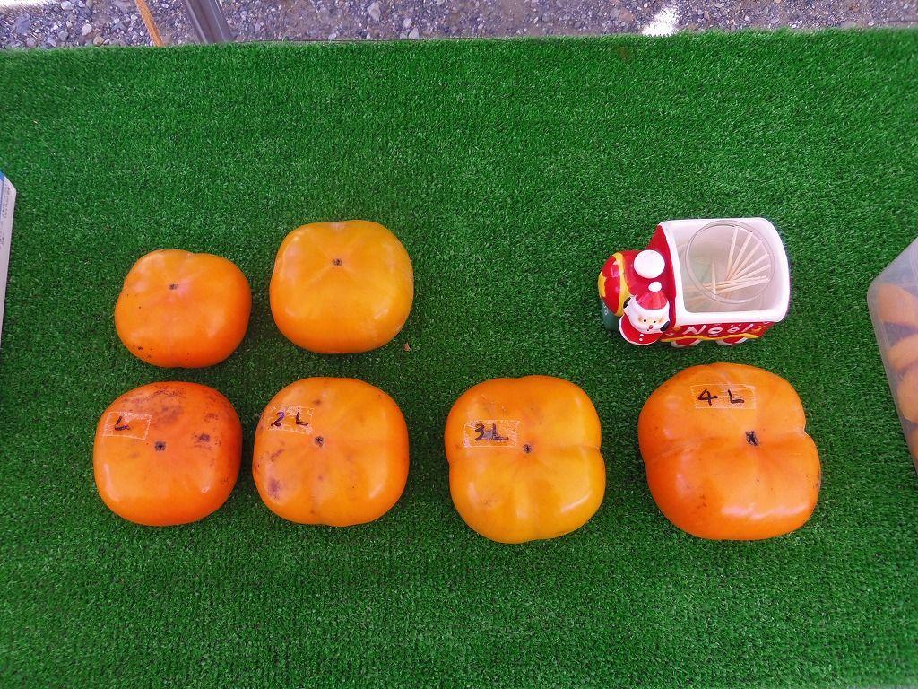 甘柿の代表格「次郎柿」は完全甘柿