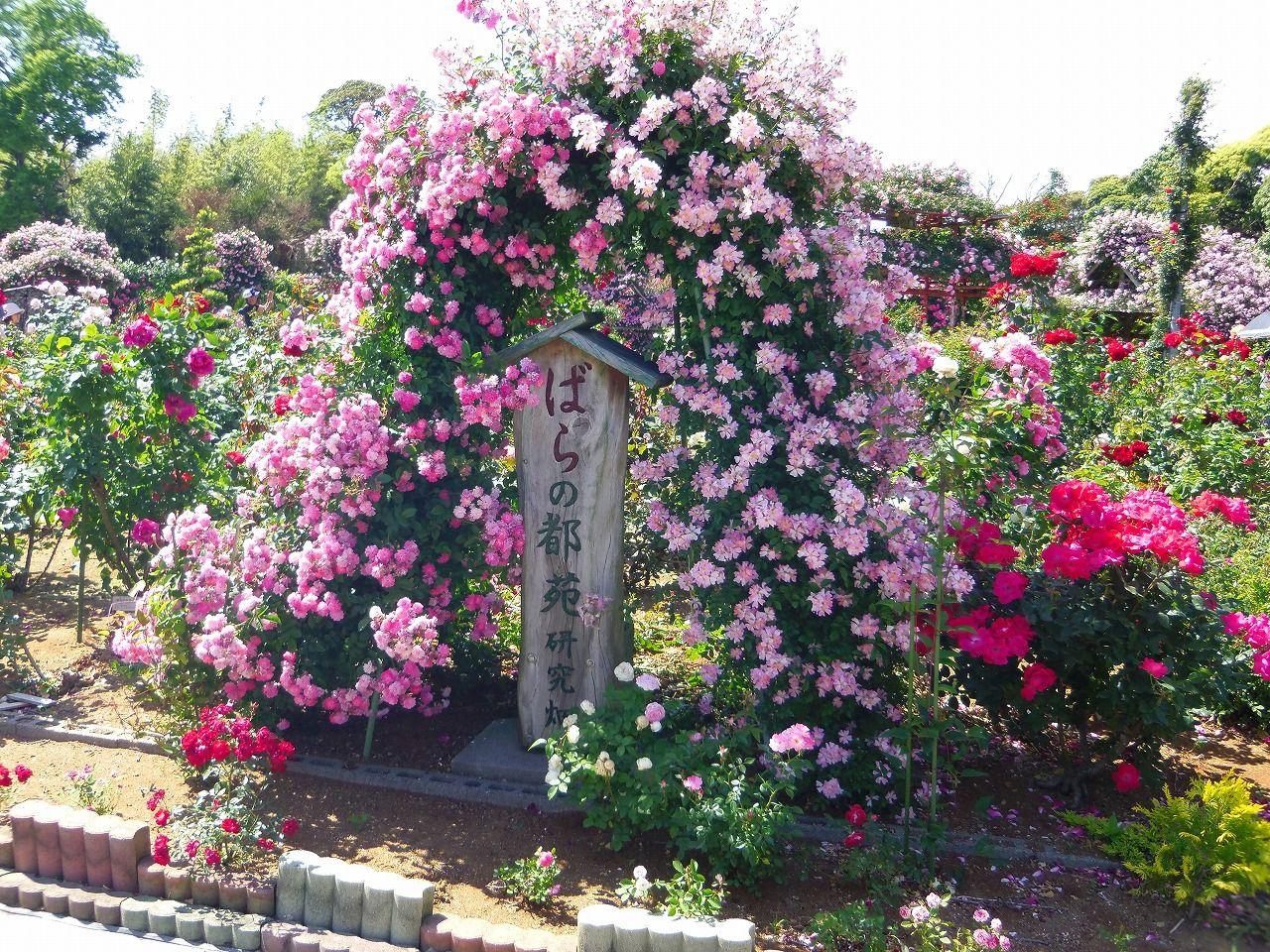 亡き妻への想いあふれる美しきバラ苑
