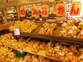 奥浜名湖の新鮮野菜が並ぶ!浜松「田空旬彩市」は気賀関所隣り