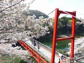 お花見×渓谷美!愛知新城「桜淵公園」は、まさに三河の嵐山