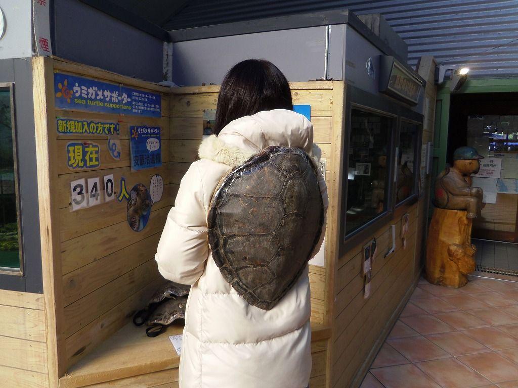 観察だけじゃない!餌やり体験ができるウミガメ飼育棟