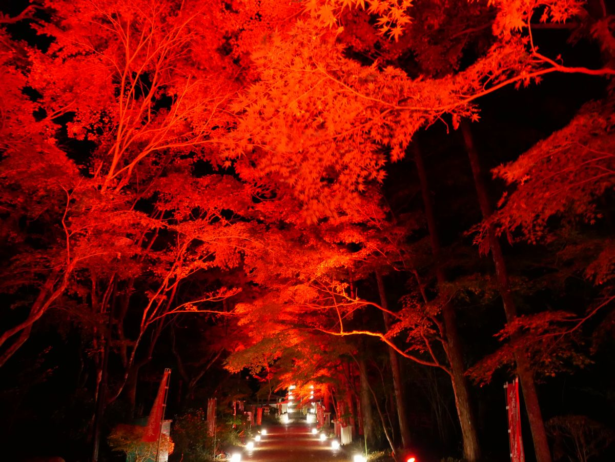 幻想的な参道に魅入られる・油山寺