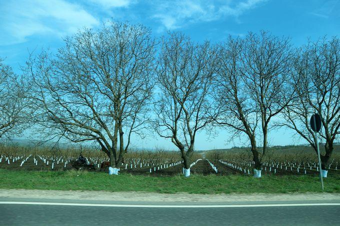 ソロカへのアクセスは車(タクシー)で。田園風景を楽しみながら