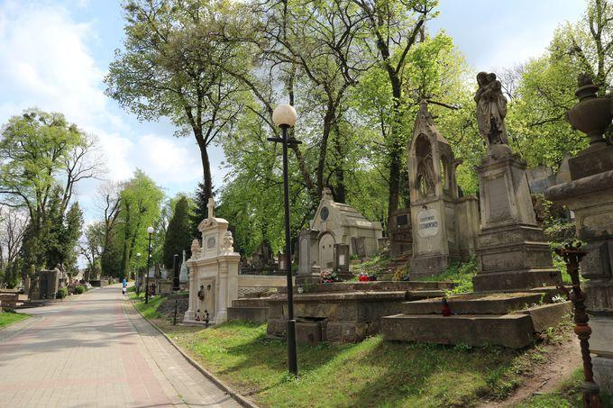 42ヘクタール、東京ドーム約9個分の広さの墓地!