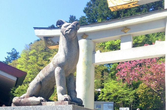 森や山を守るオオカミの神聖な『白』