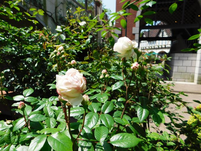 園内には12のガーデン!花の見ごろは一年中