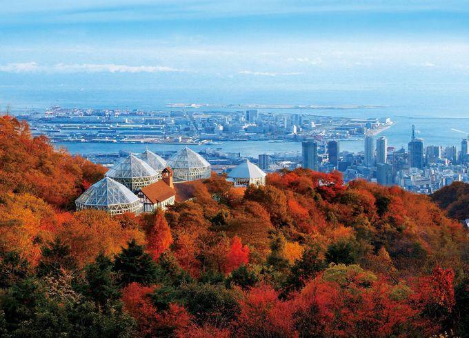 これぞ秋!コスモス畑や一面の紅葉