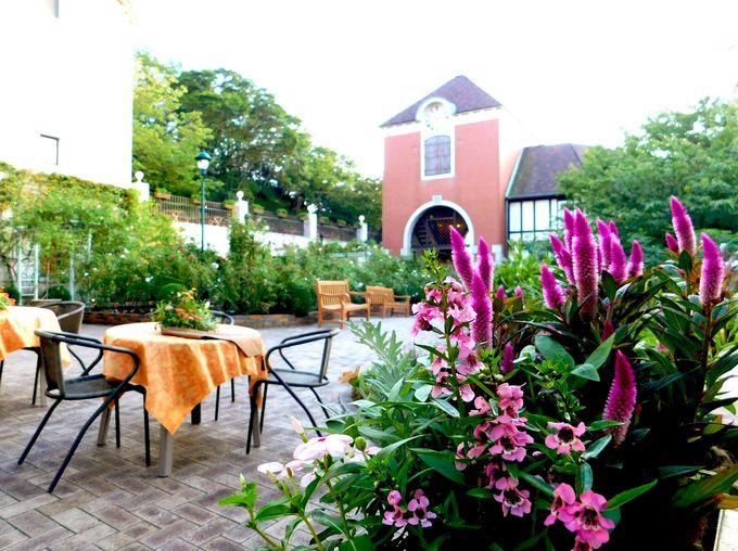 期間限定ガーデンカフェは秋ローズに囲まれて