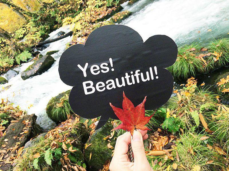 カラフルな葉っぱや苔がお出迎え!青森県「奥入瀬渓流」