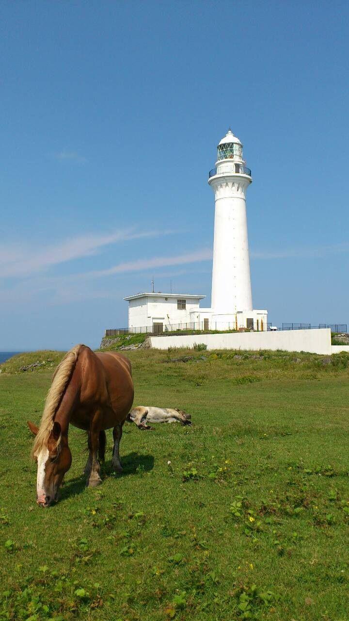 尻屋崎の白亜の灯台と寒立馬