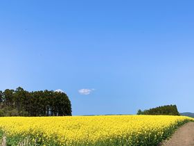 """花言葉は""""小さな幸せ""""青森県「横浜町」菜の花畑で春の訪れを感じよう"""