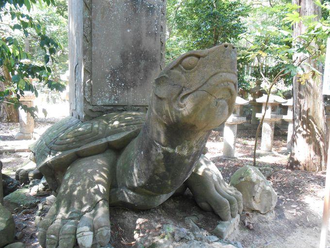 亀の石像には恐ろしい伝説が……!?