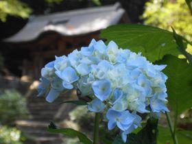 アジサイのお寺としても有名!島根県松江市「月照寺」を味わう
