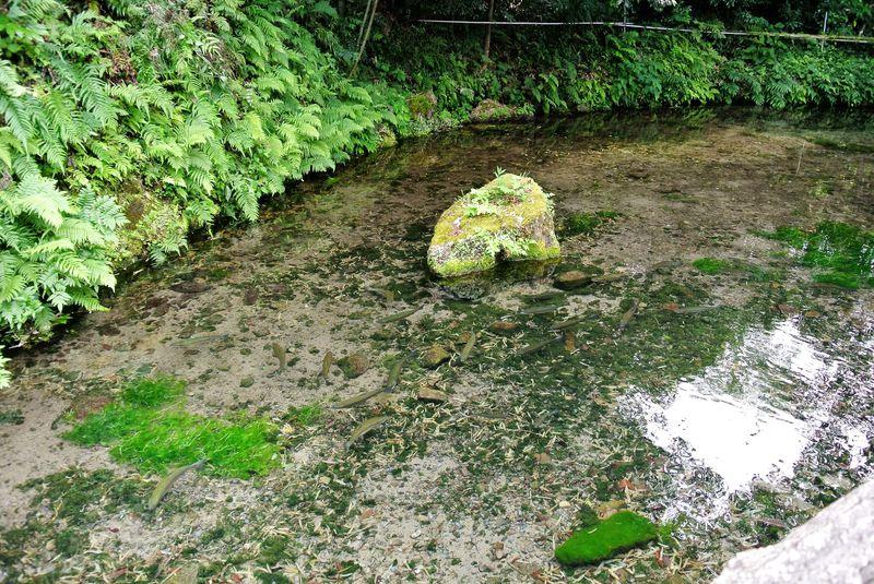 日本有数の名水!鳥取「天の真名井」で癒しの時間を過ごす