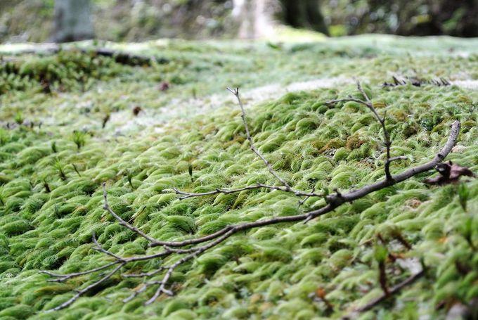 苔の美しさにも目を向けて