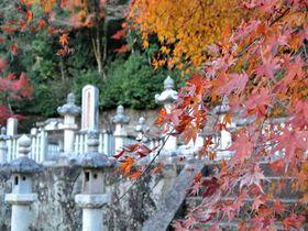 ライトアップもされる紅葉名所の墓場!?「鳥取藩主池田家墓所」