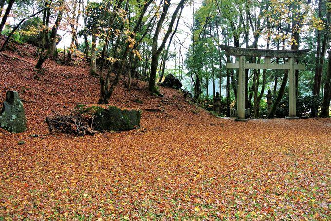 黄金のカーペットのような美しい景色が広がる境内