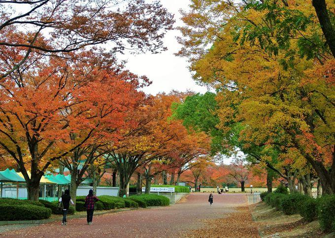 4.万博記念公園