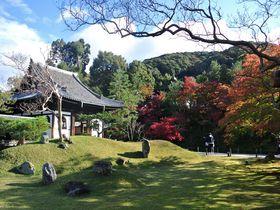 ここだけは押さえておきたい!京都「高台寺」の紅葉鑑賞ポイント