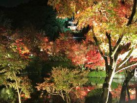 京都屈指の紅葉ライトアップを「永観堂」でご堪能あれ!