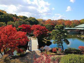 観光ついでに立ち寄れる!大阪のおすすめ紅葉スポット7選