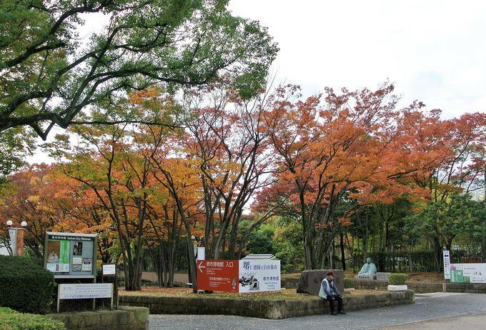 日本庭園で鑑賞する紅葉は抜群