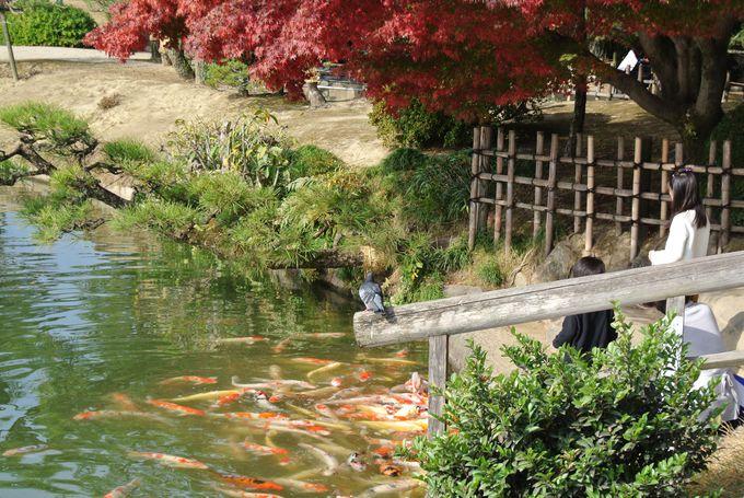 インスタ映えスポット満載!岡山「後楽園」で絶景を堪能せよ!