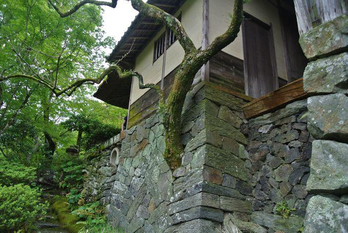 自然の素材を活かした建築