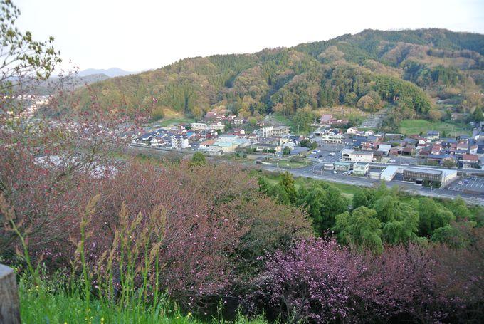 歴史的な城跡で鑑賞できる桜