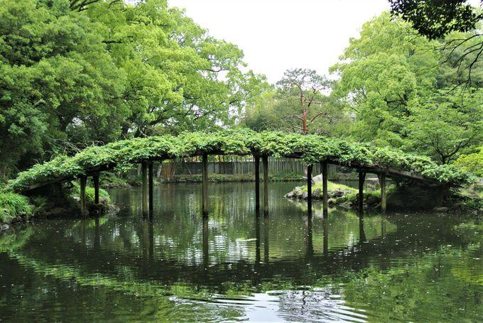 多様な藤と竹が鑑賞できる庭園
