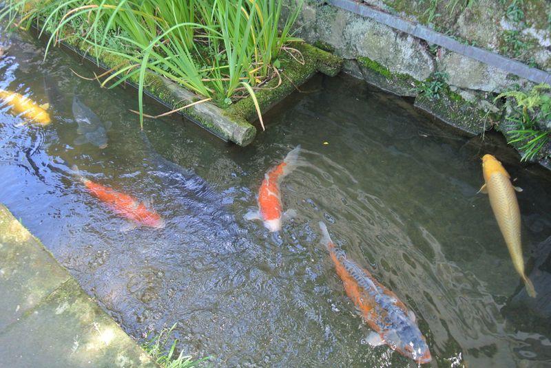 優雅に鯉が泳ぐ島根「殿町通り」で大人の町ブラを楽しもう!
