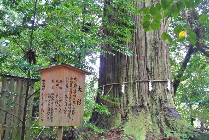 神聖な大杉は必見!出雲「須佐神社」は日本屈指のパワースポット