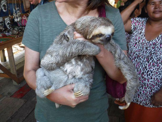かわいらしい動物たちと記念撮影
