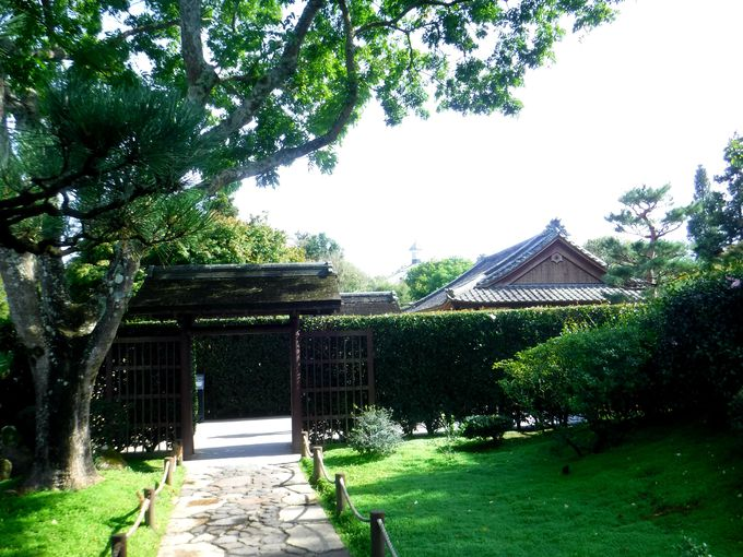 こんなところに!?ハミルトンガーデンの日本庭園がすごい!