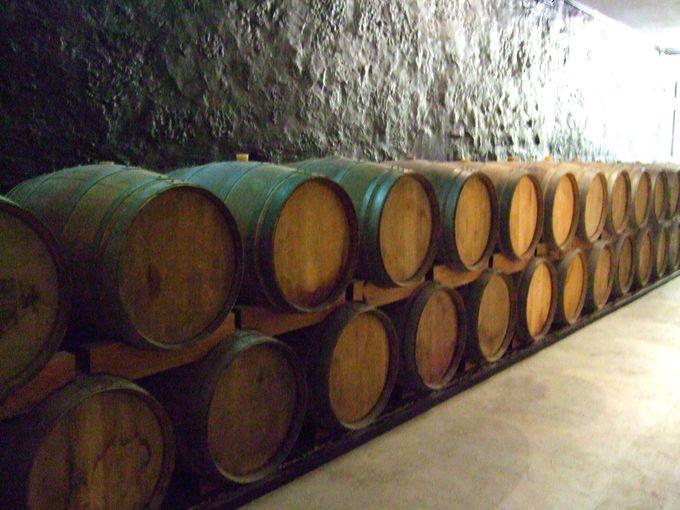 昼:ワイナリーで本場ポートワインを試飲しよう!