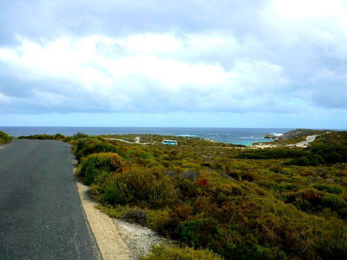 透き通るエメラルドグリーン!ロットネスト島の絶景ビーチを散策しよう