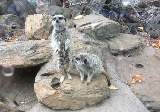 かわいすぎる!メルボルン動物園にいる癒しの小動物たち