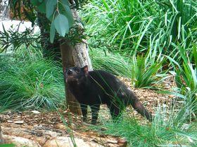 コアラにカモノハシ!メルボルン動物園でオーストラリアの動物に会う