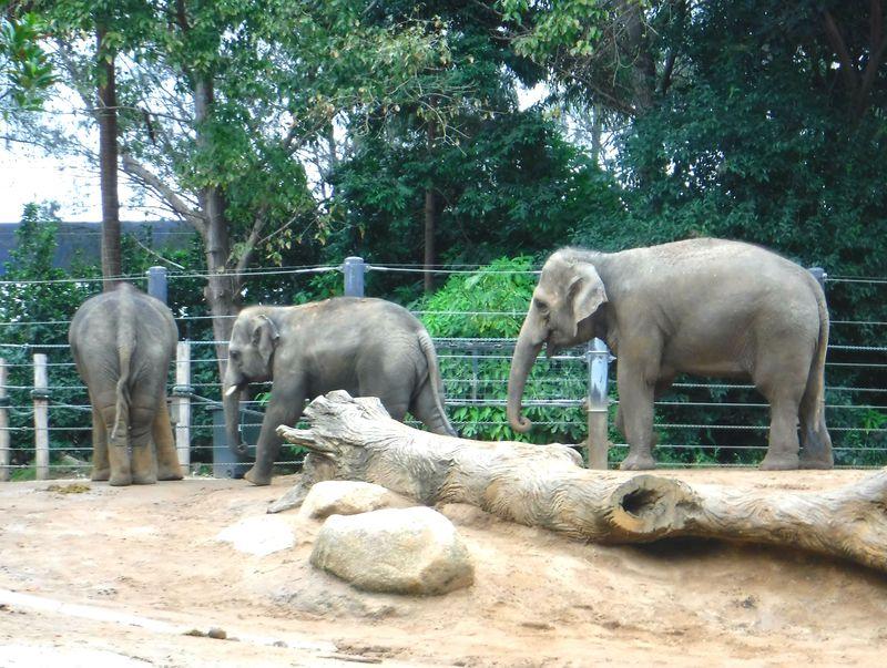 オーストラリア・メルボルン動物園にいる王道の動物たち