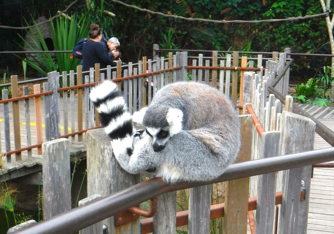 オーストラリア・メルボルン動物園への簡単アクセス