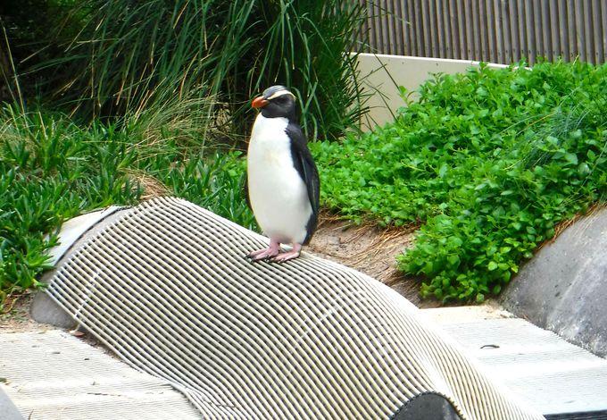 水族館も楽しめる!?オーストラリア・メルボルン動物園