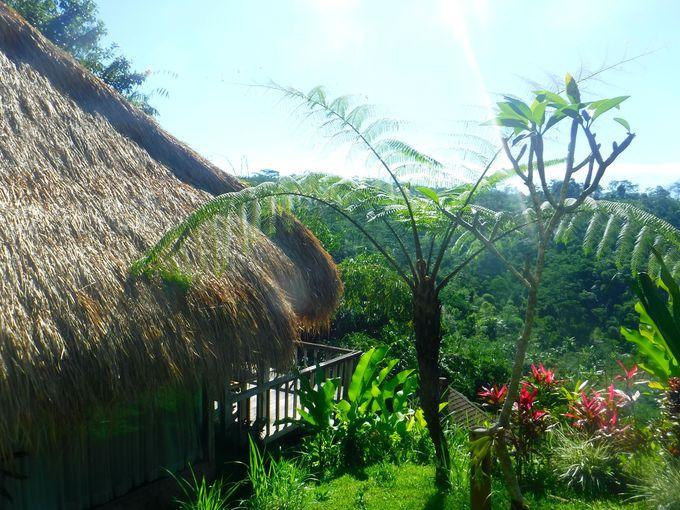 バリ島ウブドの森の中でバンガローステイ!