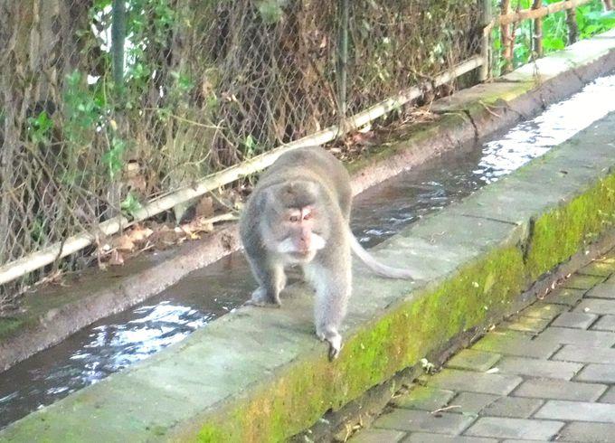 ウブド市街地で楽しめる自然「モンキーフォレスト」
