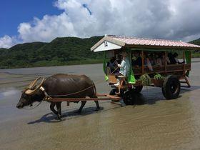 離島観光はツアーがおすすめ!石垣島発1日で巡る西表・由布・竹富