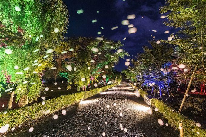 清流園の「シャボン玉ライトアップ」