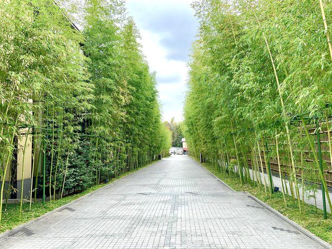 東山の非日常空間で楽しむ「フォーシーズンズホテル京都」